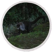 Tayra Costa Rica Animals Zoo Habitat Indigenous Population Mixing With Travellers Enjoying And Being Round Beach Towel