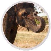 Temple Elephants Maharaja's Palace India Mysore Round Beach Towel