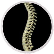 The Cervical Vertebrae Round Beach Towel