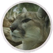 The Cougar 3 Round Beach Towel