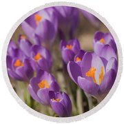 The Crocus Flowers Round Beach Towel