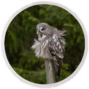 The Great Grey Owl Round Beach Towel
