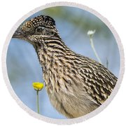 The Greater Roadrunner  Round Beach Towel