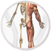 The Human Skeleton And Muscular System Round Beach Towel