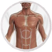 The Muscles Of The Torso Round Beach Towel