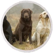 Three Kinds Of Labradors Round Beach Towel