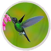 Tourmaline Sunangel Hummingbird Round Beach Towel