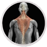 Trapezius Muscle With Skeleton Round Beach Towel