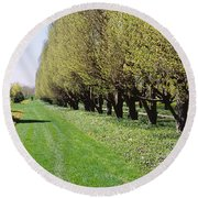 Trees Along A Walkway In A Botanical Round Beach Towel