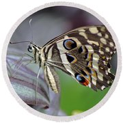Tropical Butterfly Round Beach Towel