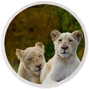 Two White Lions Round Beach Towel