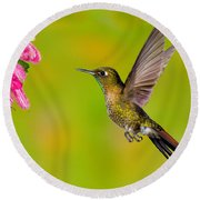Tyrian Metaltail Hummingbird Round Beach Towel