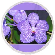 Vanda Orchid Round Beach Towel
