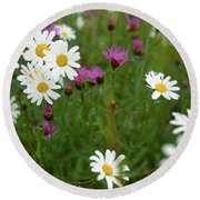 View Of Daisy Flowers In Meadow Round Beach Towel