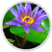 Water Lily 20 Round Beach Towel