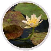 Water Lily 25 Round Beach Towel
