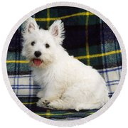 West Highland White Terrier Puppy Round Beach Towel