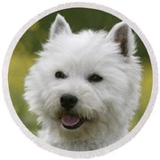 West Highland White Terrier Round Beach Towel