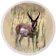 Where The Antelope Play Round Beach Towel