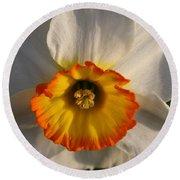 Paper White Daffodil Round Beach Towel