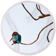 White-throated Kingfisher Round Beach Towel
