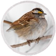 White-throated Sparrow Round Beach Towel
