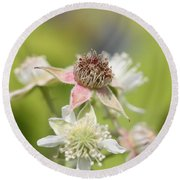 Wild Black Raspberry Blossom Round Beach Towel
