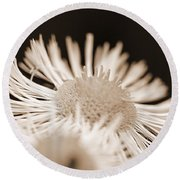 Wildflower Named Robin's Plantain Round Beach Towel