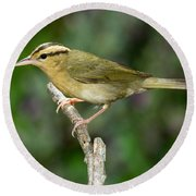 Worm-eating Warbler Round Beach Towel