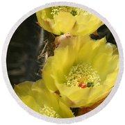 Yellow Cactus Round Beach Towel