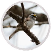 Yellow Crowned Sparrow Round Beach Towel
