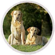 Yellow Labrador Retrievers Round Beach Towel