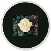 Yellow Rose At Dawn Round Beach Towel