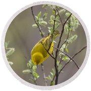 Yellow Warbler -1 Round Beach Towel