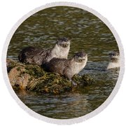 Yellowstone Otters Round Beach Towel