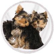 Yorkie Puppies Round Beach Towel
