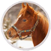 Young Horse In Winter Day Round Beach Towel