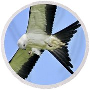 Young Swallow-tailed Kite Round Beach Towel
