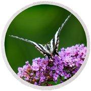 Zebra Swallowtail Butterfly Square Round Beach Towel