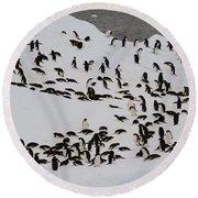 Adelie Penguins Round Beach Towel