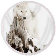 Arctic Wolf Pup Round Beach Towel