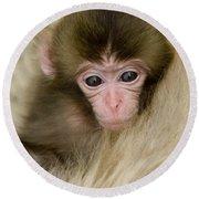 Baby Snow Monkey, Japan Round Beach Towel