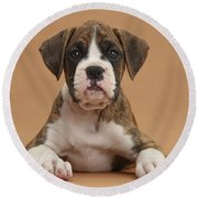 Boxer Puppy Round Beach Towel by Mark Taylor