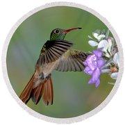 Buff-bellied Hummingbird Round Beach Towel