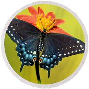 Eastern Black Swallowtail Butterfly Round Beach Towel