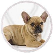 French Bulldog Puppy Round Beach Towel
