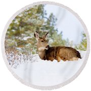 Mule Deer In Snow Round Beach Towel