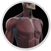 Muscles Of The Upper Body Round Beach Towel