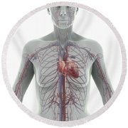 The Cardiovascular System Female Round Beach Towel
