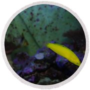 Tropical Fish And Coral Round Beach Towel